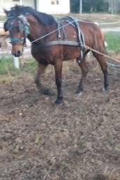 Vendo cavalo manso montaria , charrete e vai no servico