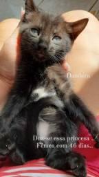Estou doando gatinhos machos e fêmeas com 46 dias
