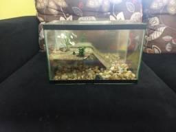 Aquário para tartaruga , 31 cm de comprimento por 21 de altura , R$ 35,00.