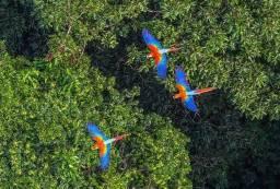 ICMBio 20.000 Hec. Certificado desde o Ano de 2013 Bioma Amazônia