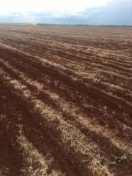 Área Agrícola com 25 Anos de soja ( Acreúna-GO ) 39 Alqueires