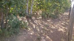 Fazenda 140 alqueires bruta na bacia do Araguaia