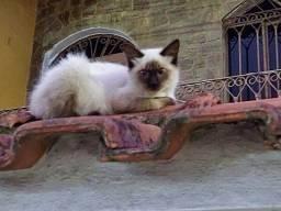 Adote um Gatinho Abandonado