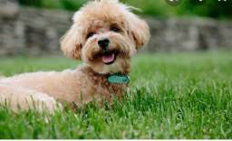 Pedido de doação,coloquei essas fotos ai so pq é pedido de cãozinho