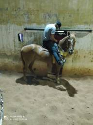 Cavalo de esquerda vidio no Whatsapp *