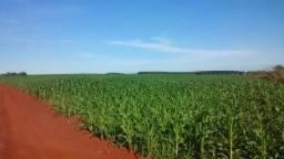 Fazenda a venda no Mato Grosso do Sul - Sidrolândia com 709 Hectares
