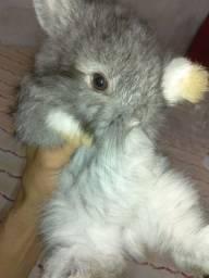 Mini coelho Lion