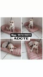 Cachorrinha para adoção doação 10 meses