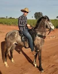 Cavalo manso novo 3 anos