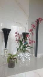 Título do anúncio: Phalaenopsis Doriteabopsi pulcherima champonensis