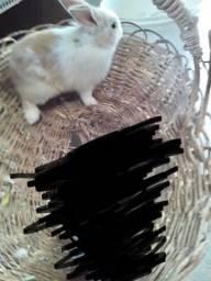 #Vendo este coelho  fêmea #