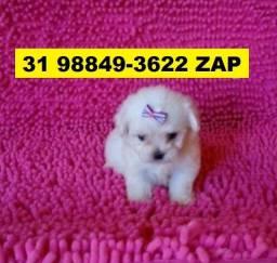 Canil Pet Cães Filhotes BH Poodle Maltês Bulldog Lhasa Shihtzu Yorkshire