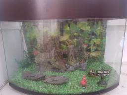 Lindo aquário 60L