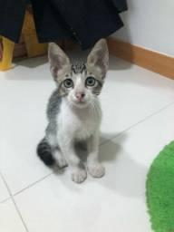 Gato (adoção)
