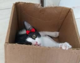 Doação linda gatinha frajola em Juazeiro do Norte