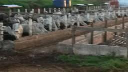 Fazenda a venda 50 km de Londrina, Paraná ( Lavoura e Pecuária )