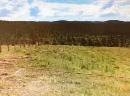 Fazenda de Pinus a venda no Rio Grande do Sul- 10.000 m³ mês