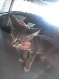 Gato filhote para doação dois meses