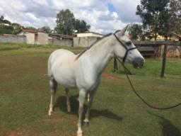 Égua MM , registrada