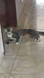 Doa -se linda gatinha fêmea
