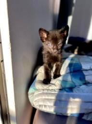 Gato p adoção