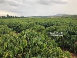 Fazenda com 35 alqueires (169,40 hectares) em São Mateus ES