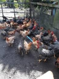 Dona Ana das galinhas caipira