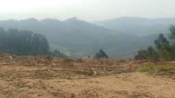 Terreno para sítio e com eucalipto