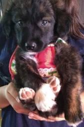 Estamos doando este cãozinho
