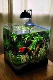 Plantas aquáticas para aquário