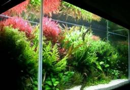 Plantas Aguaticas Niterói monte seu aquario conosco