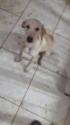 Doação Responsável Cachorro Macho