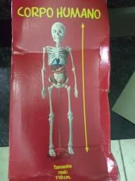 Coleção corpo humano salvat completo*r$700,00 80 fascículos