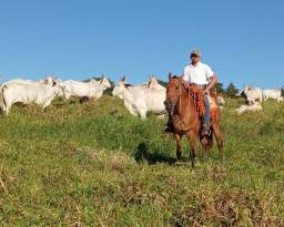 Vaqueiro e  domador