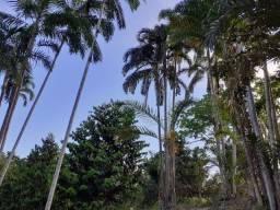250X1.000, c/igarapé, casa, energia, poço, viveiro produzindo, plantações e documentado.