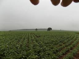 Título do anúncio: Fazenda de 630 alqueires, região produtora de grãos