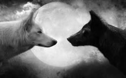 F.souza manaus adestramento de cães