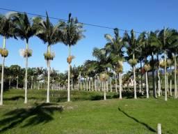 09 - Atenção - Fazenda de 270 Hectares em Porto Belo