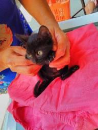 gatinho lindo e carinhoso para a adoção!