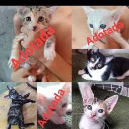 Doação responsável de gato (Fêmeas)
