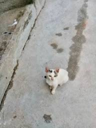 Gato Adoção Responsável ( macho )