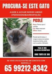 Procura-se o Picolé