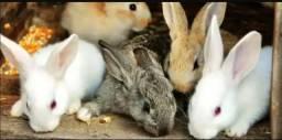 Vendo filhotes de coelhos, 20 real cada filhote