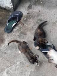 Doa se duas gatas