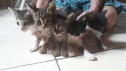 5 Gatos filhotes para doação