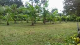 Vendo Terreno em Belterra/PA, todo gramado, medindo 40x29