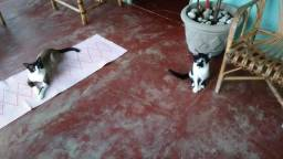 Doa-se 2 gatinhos