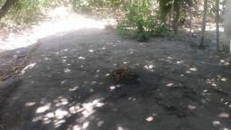 Terreno no sítio em tamandare