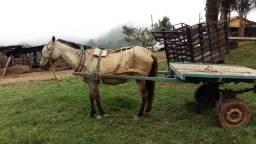 Equinha de marcha carroca charrete e lida com gado novinha etcOportunidade urgente barato