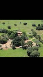 Fazenda em Paraíso do Tocantins a Fazenda pronta para criação de bovinos